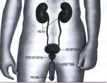 Prostatite cure naturali