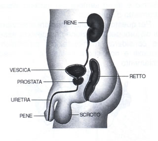 prostata sintomi uomo la